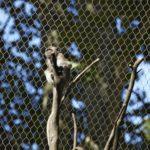 Basel Zoo Primate Enclosure Interior Webnet