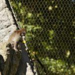 Basel Zoo Primate Enclosure Webnet Interior