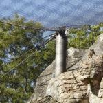 Basel Zoo Primate Webnet Enclosure