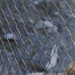 Jakob Webnet for Zoo Enclosures