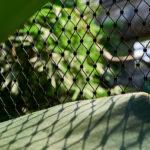 Jakob Webnet for Bird Aviary