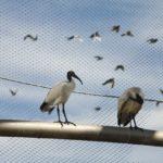 Temaiken Zoo Bird Aviary Webent Interior