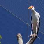 Temaiken Zoo Webnet Aviary